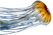 Jellyfish metaphor for big data without modeling